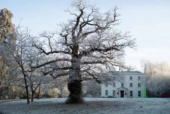 Filomena. Drzewo przed Domem Sióstr